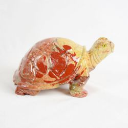 Želva střední č.2